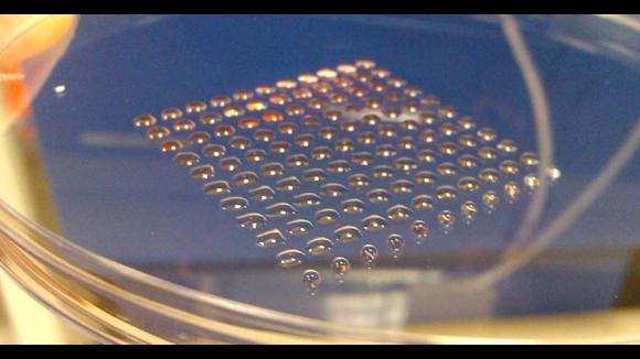 3D printed embryonic stem cells